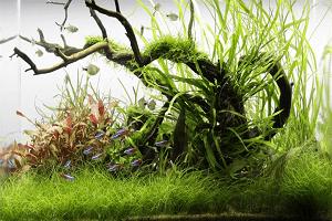 Založenie akvária jednoduchý postup 10 krokov