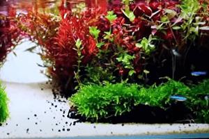 Tajomstvo krištáľovo čistej vody v akváriu
