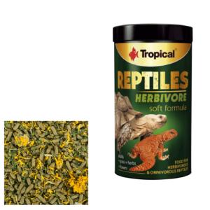 Tropical REPTILES HERBIVORE