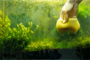 Zelená voda jej príčina a odstránenie
